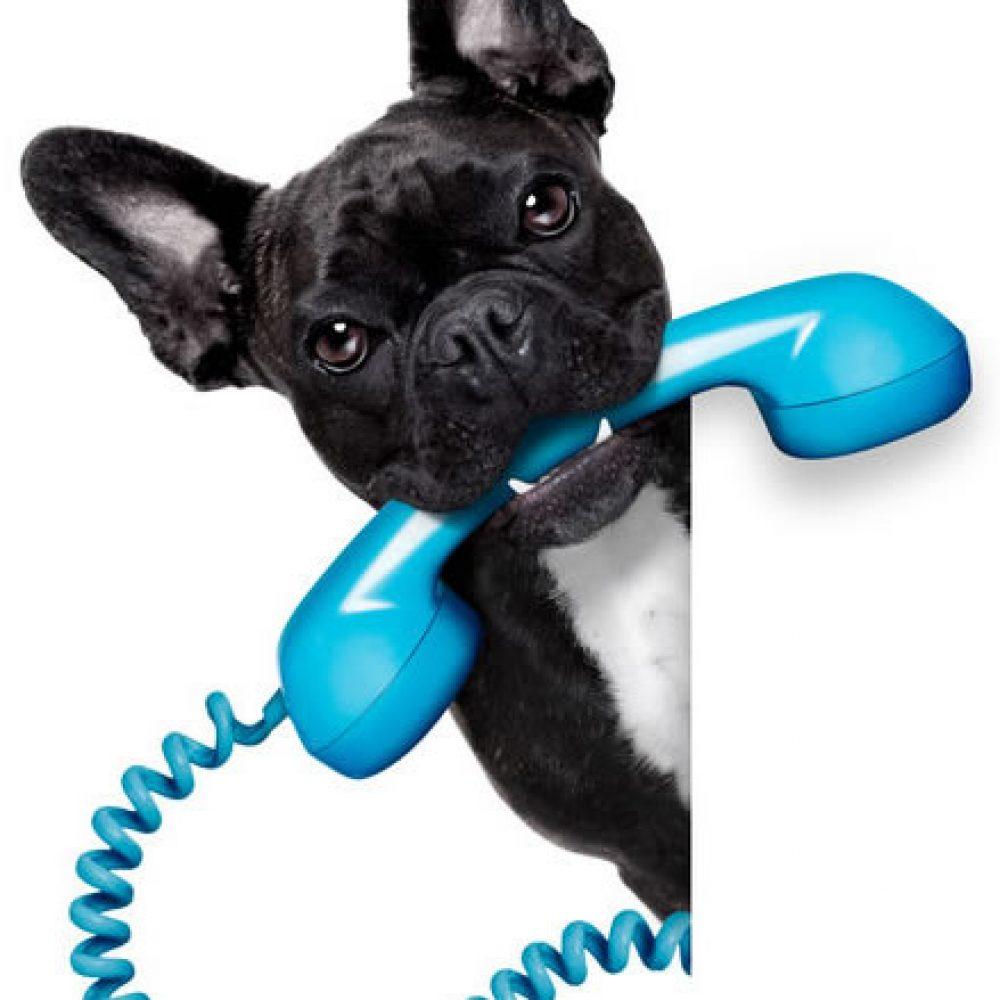 Dog-Phone da limpeza de sofá e lavagem de sofá